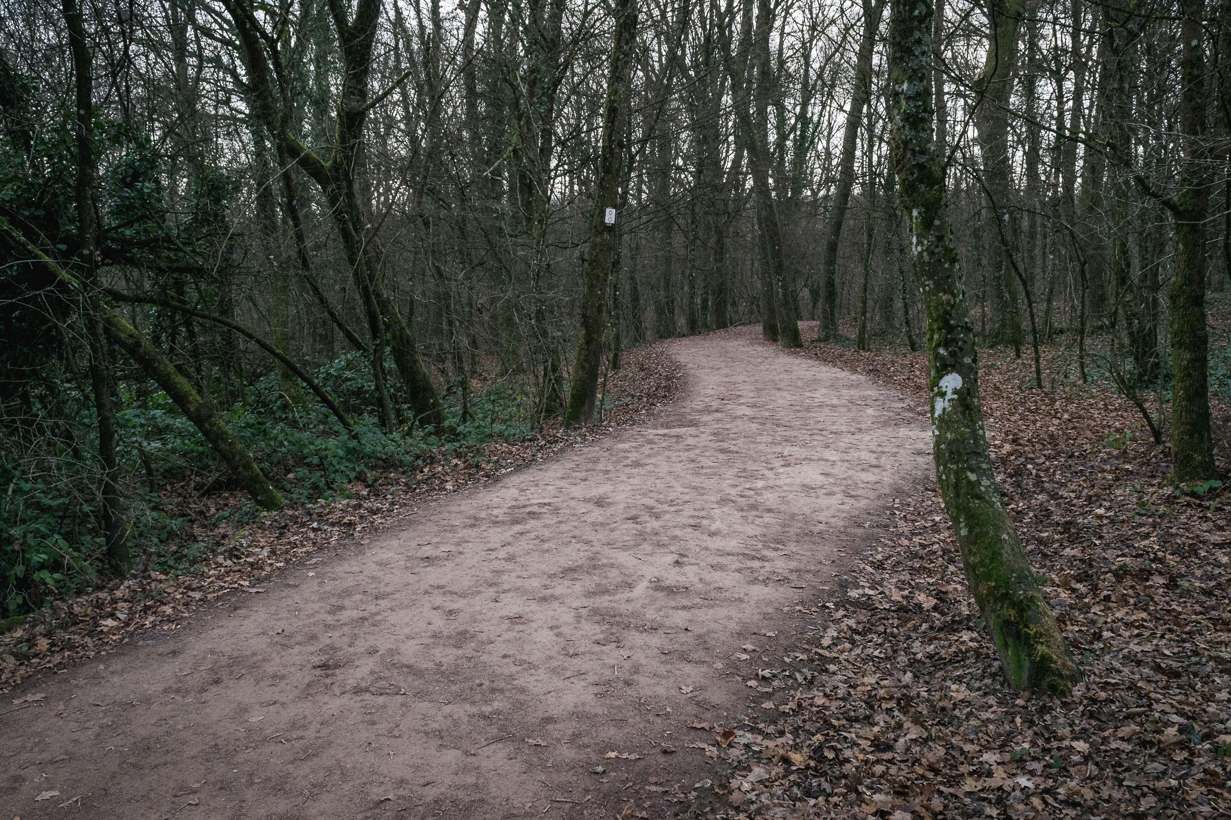 [PROJET 52] #14 : En forêt