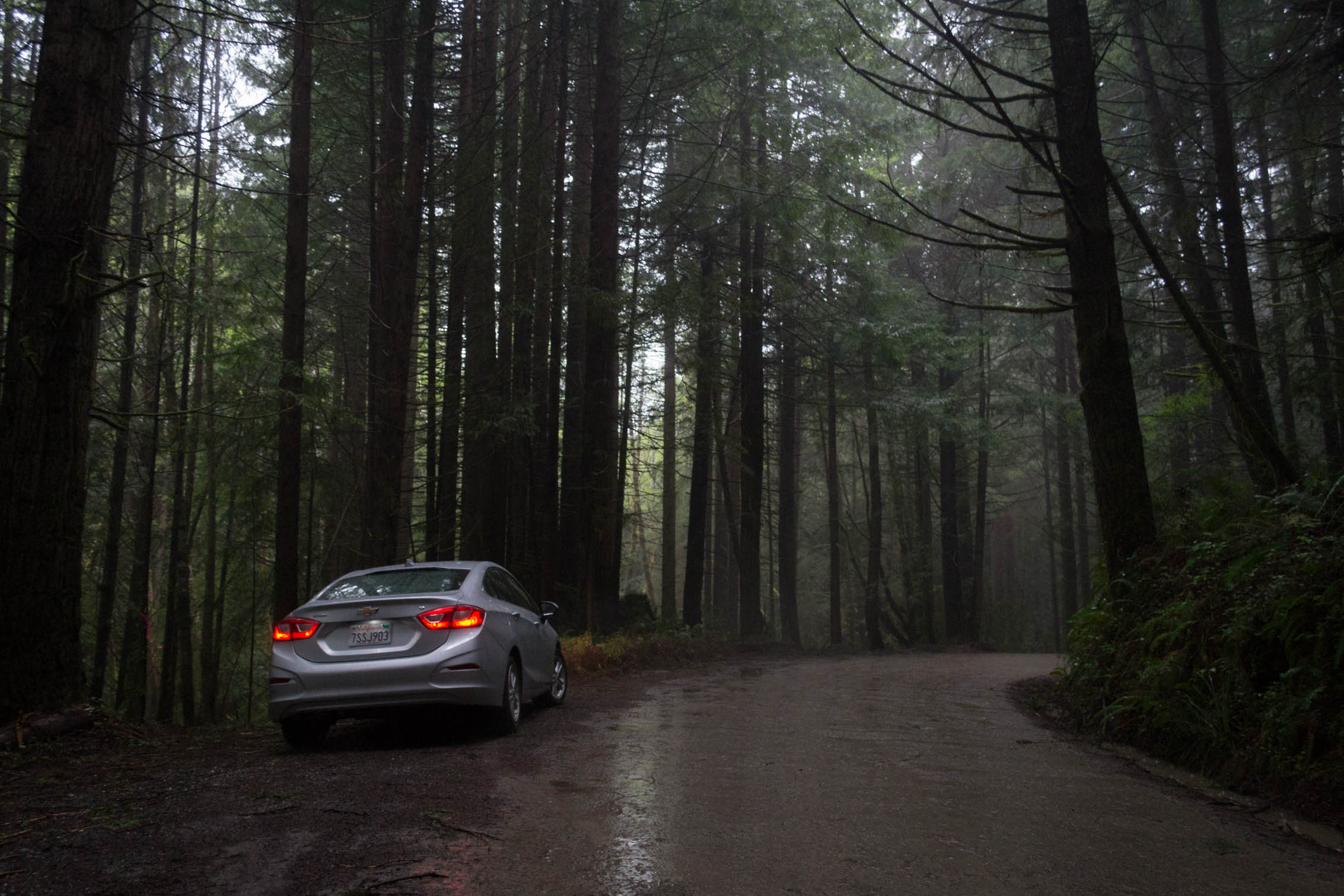 [ROAD TRIP USA 2017] Redwood et Sequoia